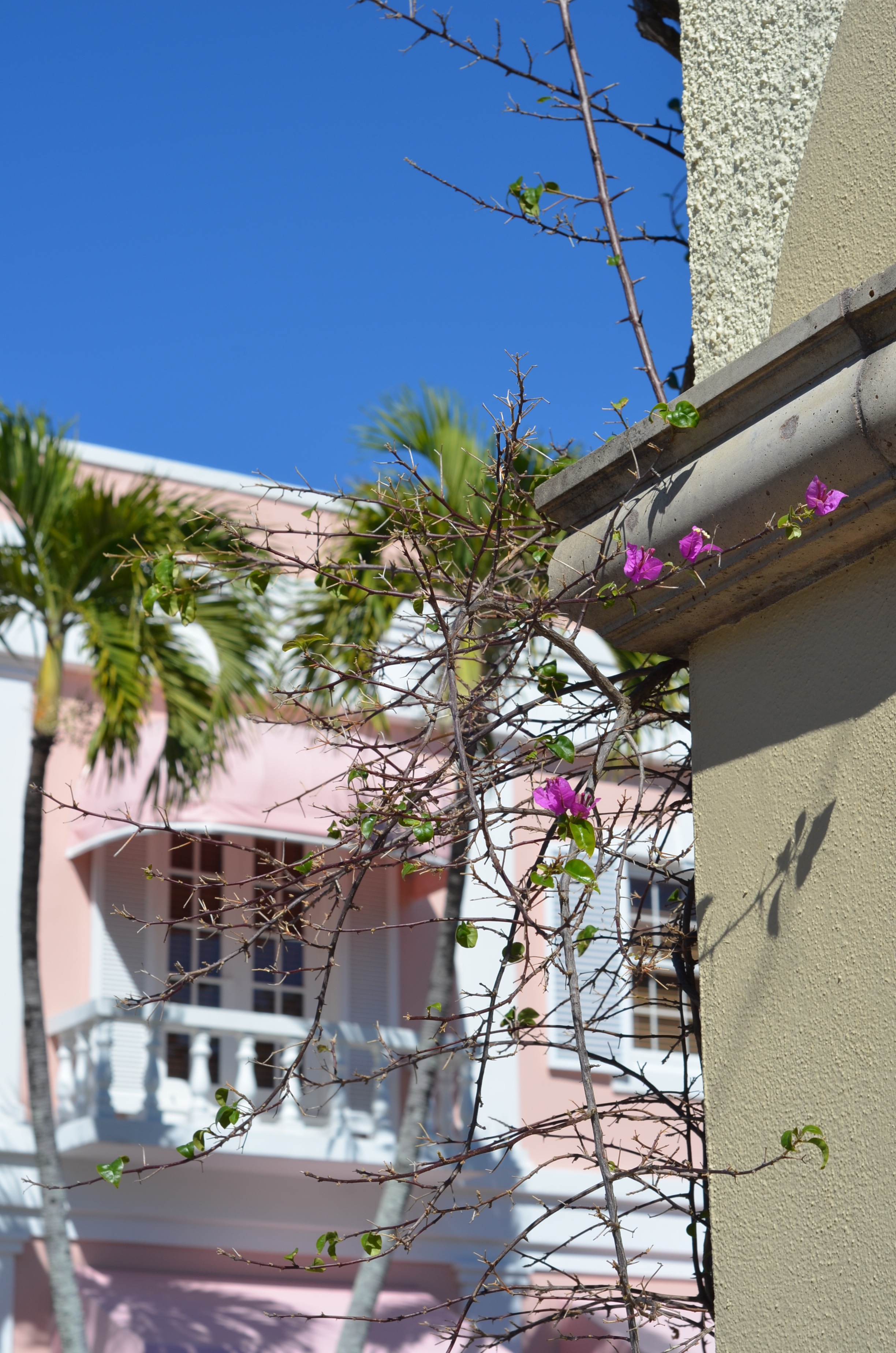 naples florida ivy pink flowers pink buildings